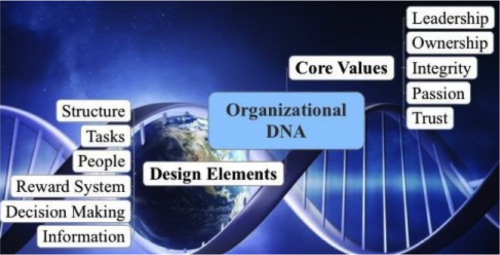 Assess & Re-Design your Company Genome Structure - SOS.BIZ - Giuseppe De Giovanni